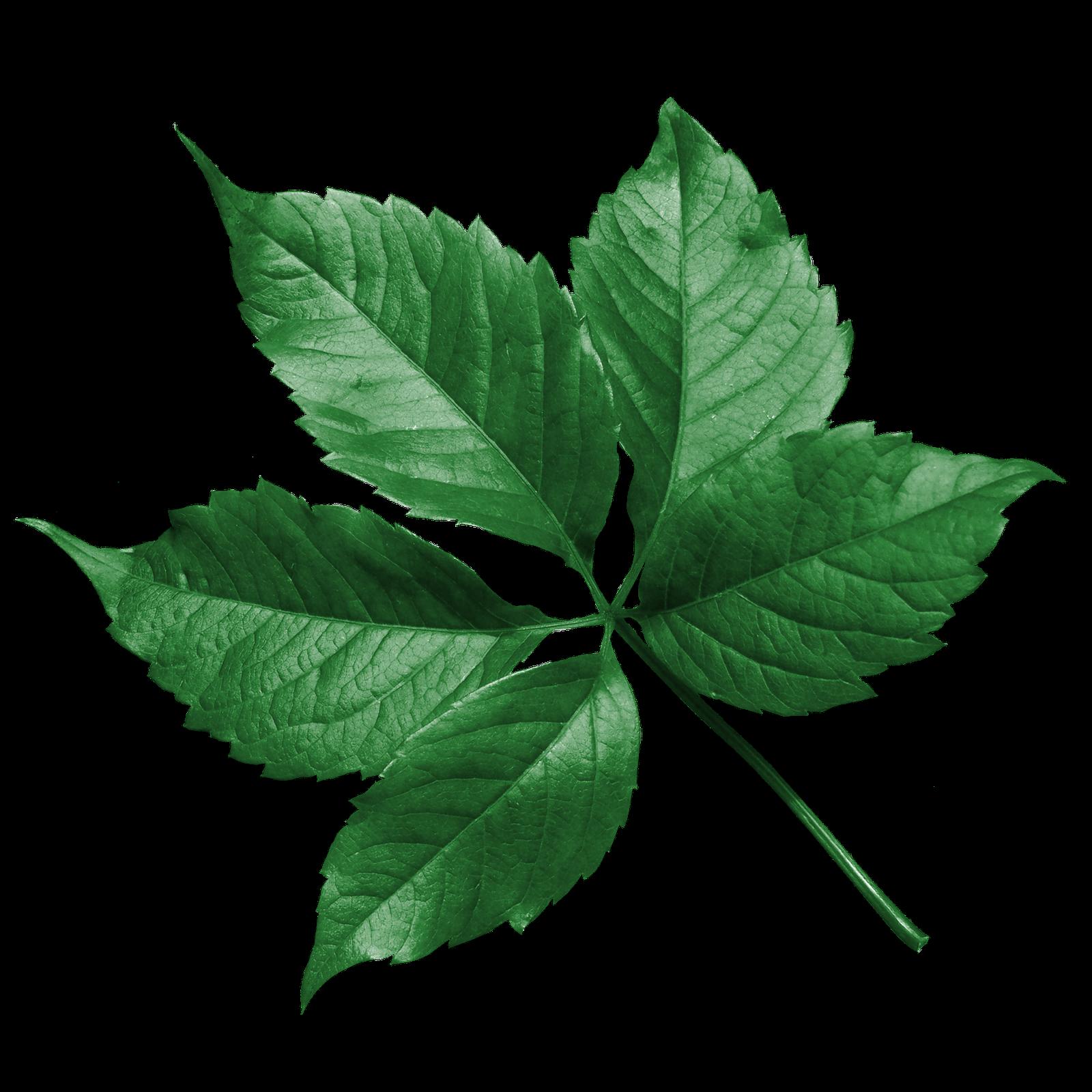 Cambios alarmantes en el ciclo de las hojas a nivel - Plantas de hojas verdes ...