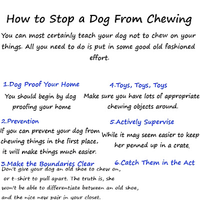 how to get a dog to stop