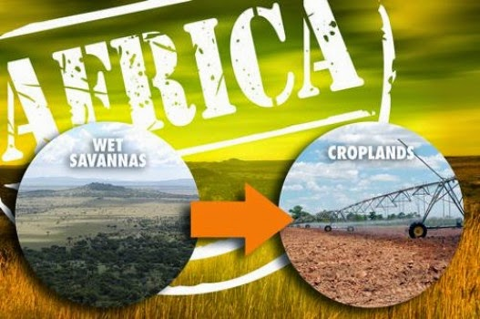 Converting Africa's wet savannas into farmland would come at a high environmental cost and, in some cases, fail to meet existing standards for renewable fuels. (Credit: Ticiana Jardim Marini, Woodrow Wilson School) Click to Enlarge.