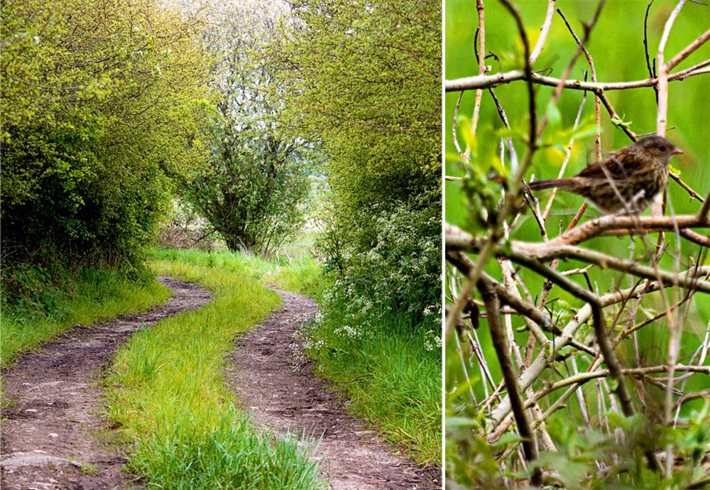 diptych of a winding country path and a small brown bird in a hedge
