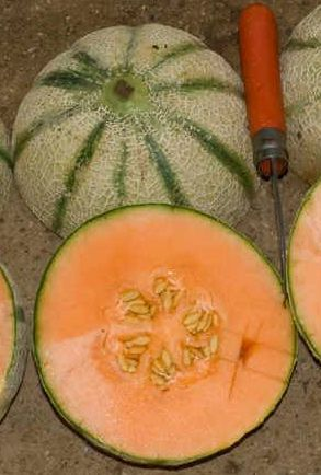 Kochbuch f r max und moritz sommersalat mit melone for Melone charentais