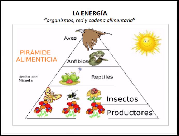 La Energía: organismos, red y cadena alimentaria