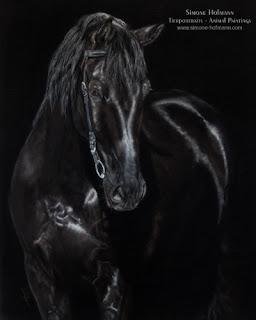 Tierportrait - Pferdeportrait schwarzer Hengst, gemalt mit Pastellkreide auf Velour. Tiermalerin Simone Hofmann