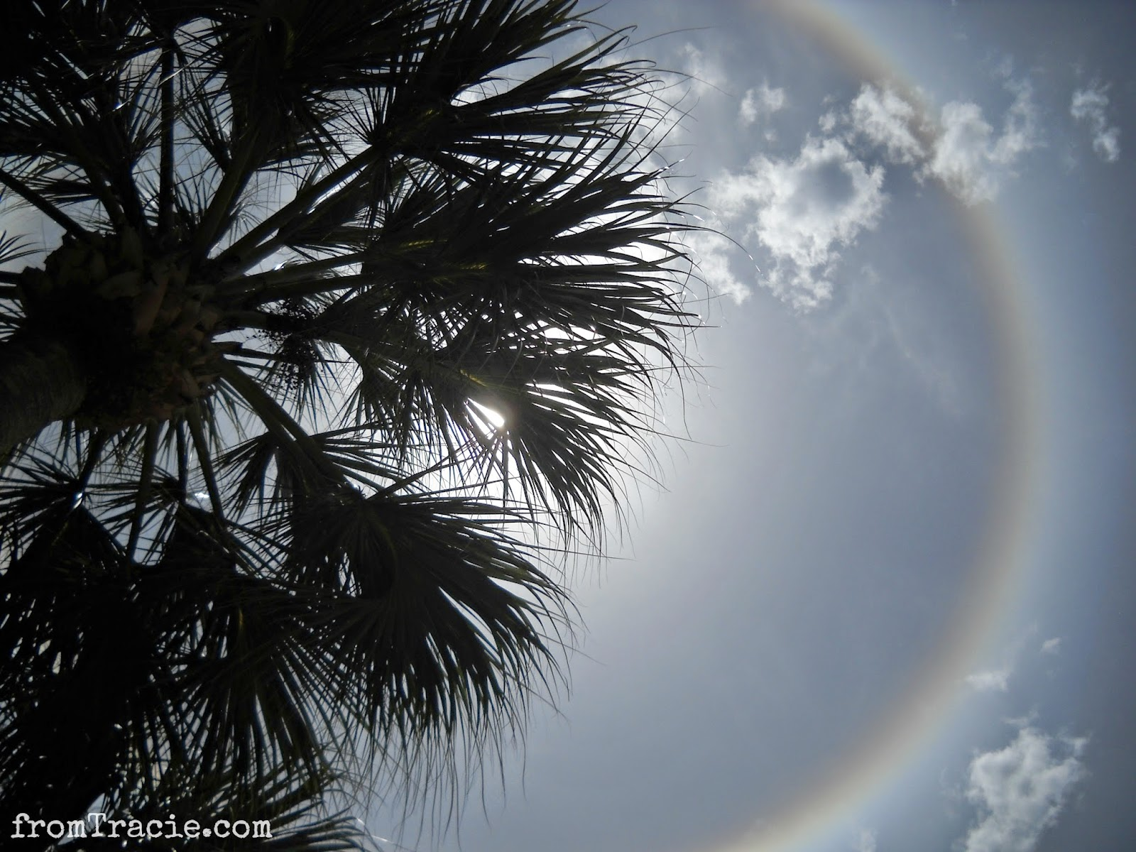 Florida Sun Ring Halo