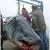 Isi Perut Ikan Jerung Ini Pastinya Buat Anda Terkejut