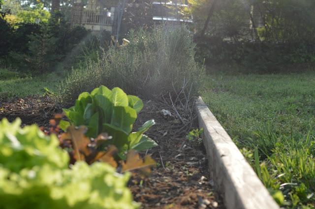 Garden up close - Impromptu BBQ - The City Dweller