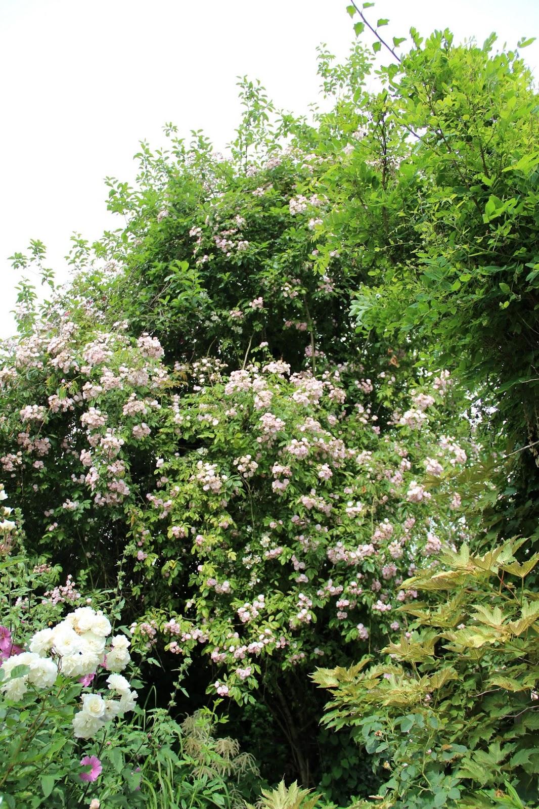 Derri re les murs de mon jardin p riple en belgique jour 1 la p pini re f - Derriere les murs de mon jardin ...