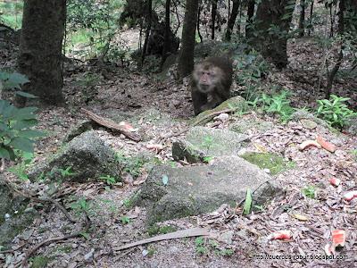 Huanshan - Yellow Mountains - Monkeys