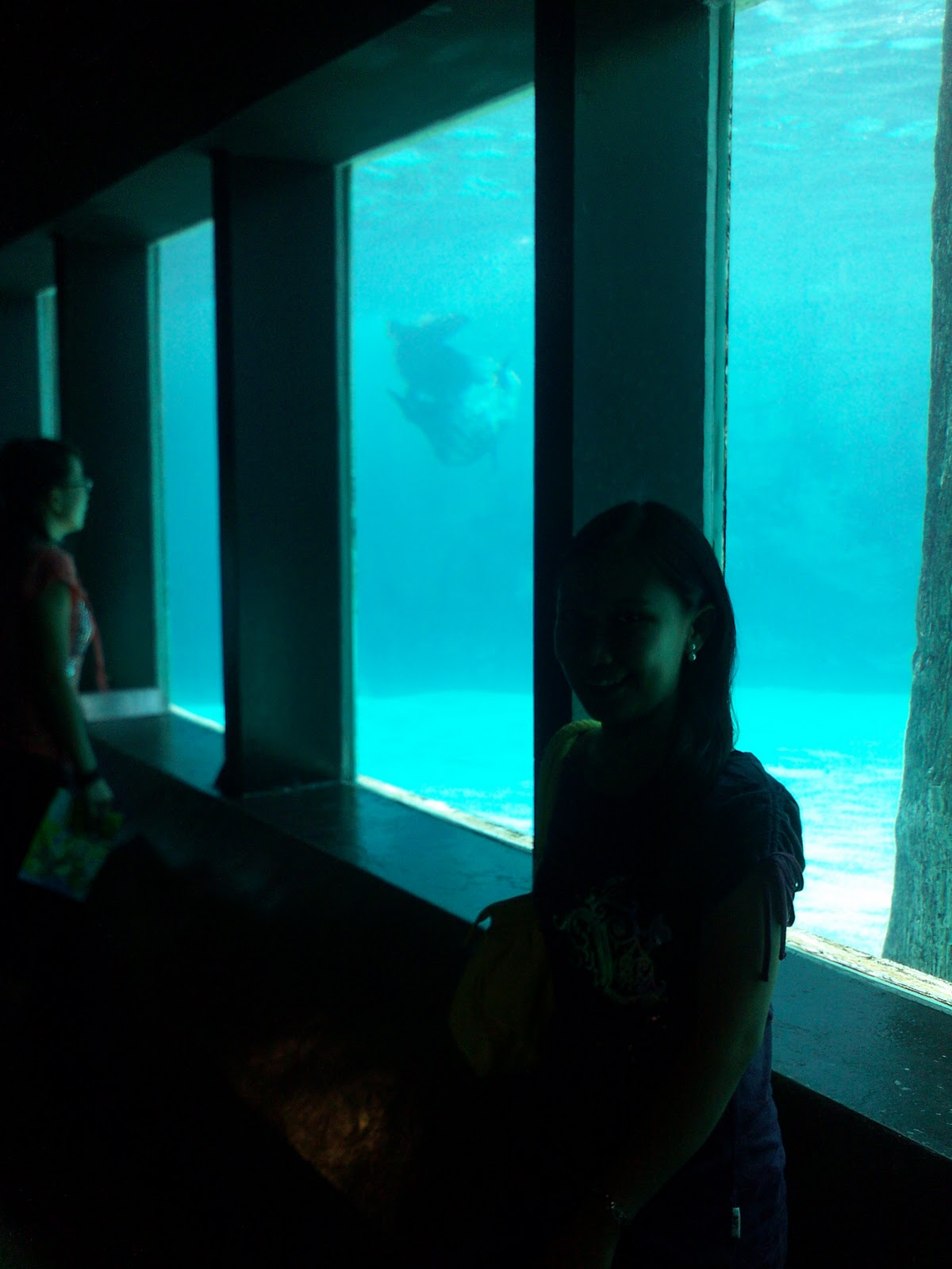 Hong Kong Ocean Park sealion