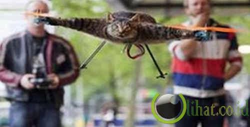 Kucing Jadi Helikopter