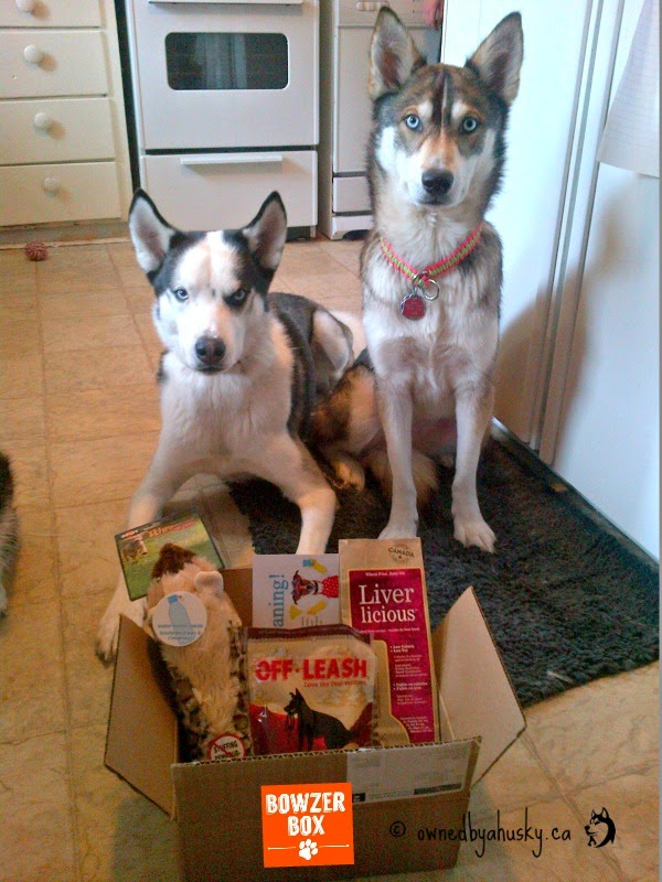 huskies pose with their treats