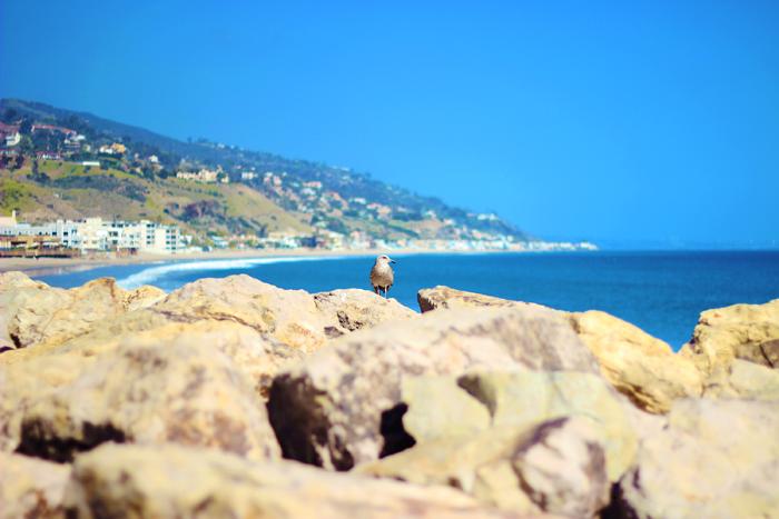 aimerose travel blog malibu pier bird