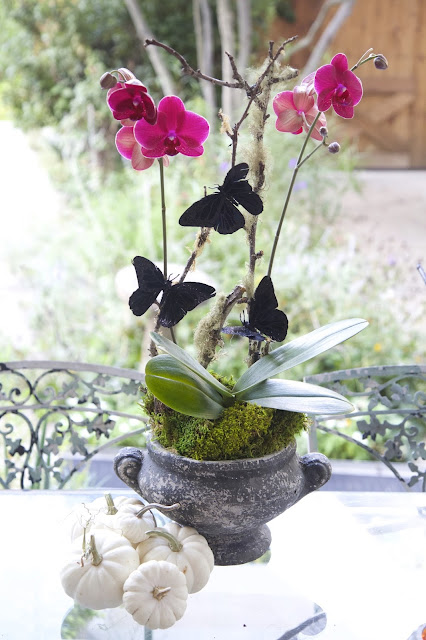 Halloween Orchid Decor with Black Butterflies and white pumpkins; How to Landscape an Orchid; Nora's Nest