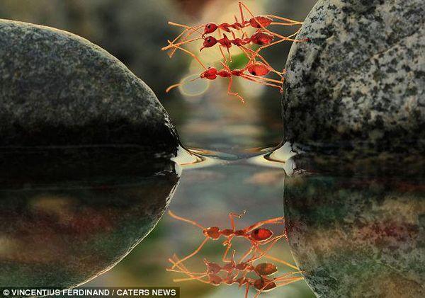 مجموعة من غرائب و عجائب الصور المذهلة تم تصويرها بواسطة مصوروا الحياة الطبيعية