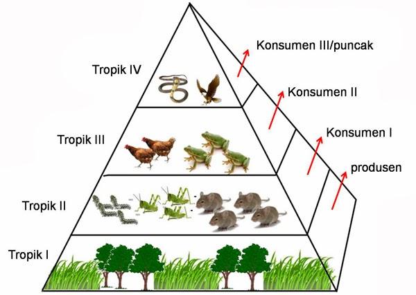 Komponen Ekosistem Biotik