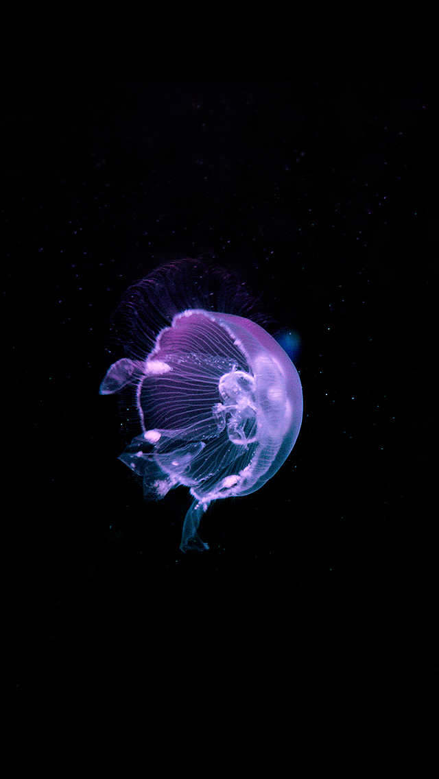 Be linspired more iphone 5 backgrounds for Jellyfish wallpaper home