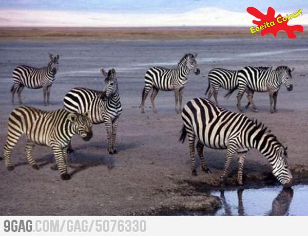 errado na foto, zebra, eeeita coisa