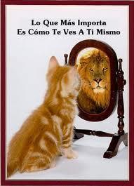 Un gato se mira al espero y ve reflejado un león