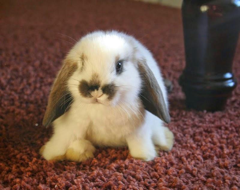 http://1.bp.blogspot.com/-47cHnlT1TmE/VRxNf78ur0I/AAAAAAAAFWg/WQYuO4hsGnM/s1600/Bunny-stefan-and-bunnies-30406303-800-634%2BBLOG%2BHOP%2BPIC%2BFOR%2BEASTER%2B2015.jpg