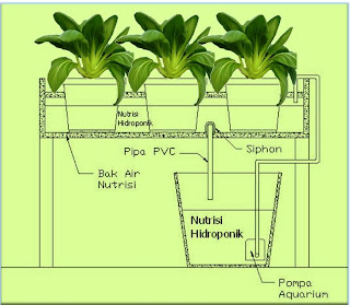 Hydroponic ebb and flow system, hidroponik pasang surut, Green Pak coy