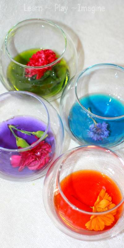 natural watercolor paint from fresh flowers learn play