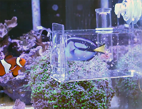 fish traps how to catch aquarium fish like a pro marine ForAquarium Fish Trap