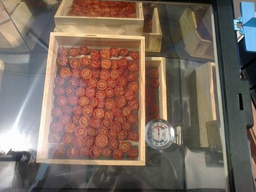 horno-solar-tomates