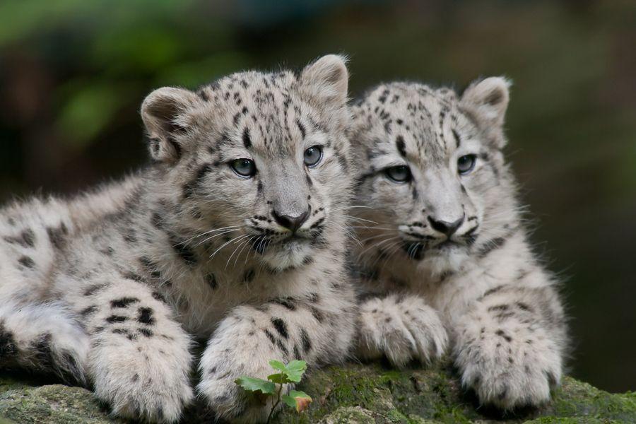 11. Twins by Sven Dannhäuser