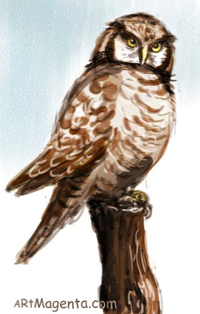 Northern Hawk Owl sketch painting. Bird drawing by artist and illustrator Artmagenta