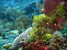 terumbu karang di laut alor