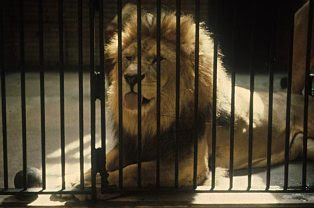 Image gallary 5: zoo animals in cages Beautiful Pictures ...