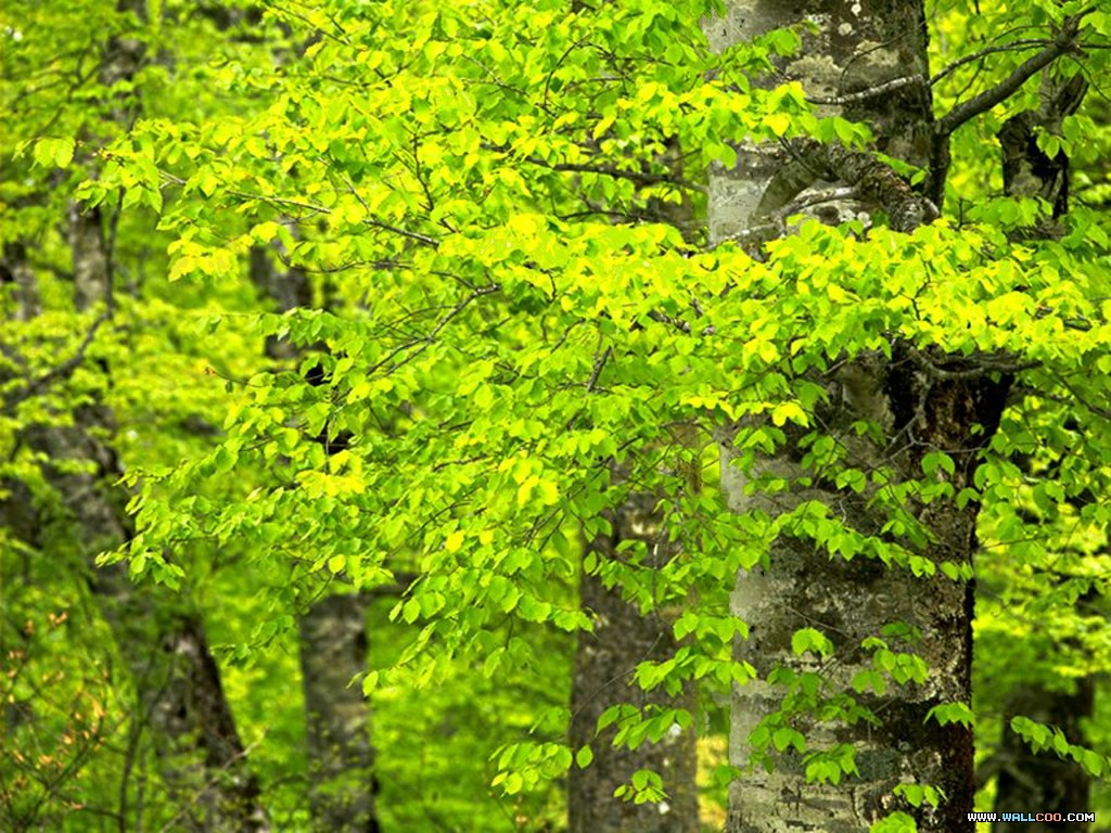 Beautiful Pictures Of Green Nature Natural Images High Resolution Desktop Picture Amazing