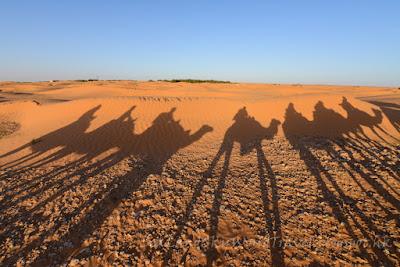 突尼西亞, tunisia, Sahara Desert, 撒哈拉沙漠