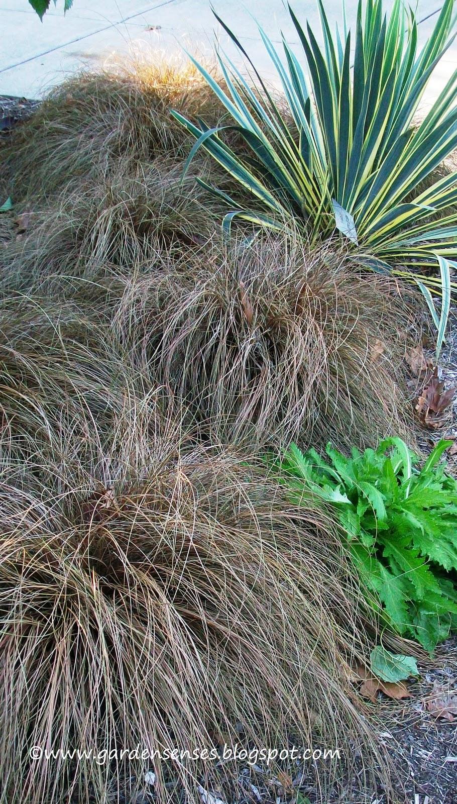 Garden sense book review perennial companions for Maiden fountain grass