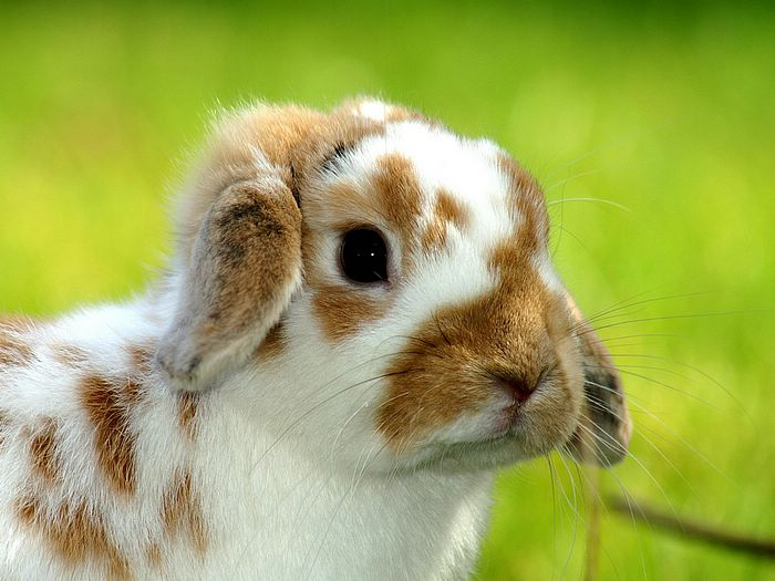 Cute Little Easter Bunny Pictures