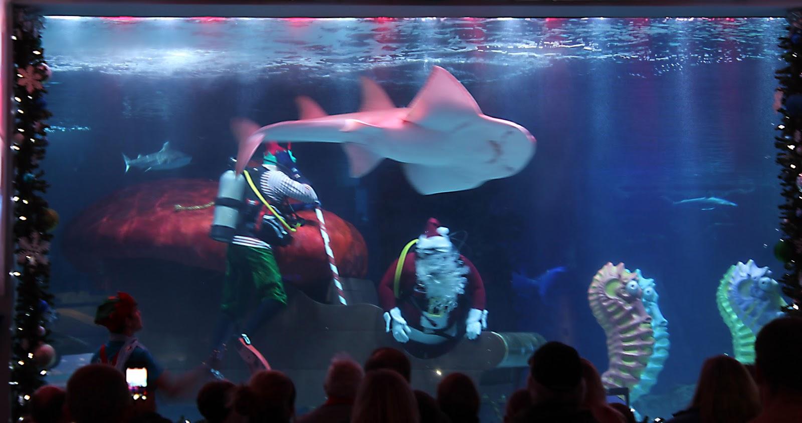 Lyinn 39 S Blog Scuba Santa At Newport Aquarium