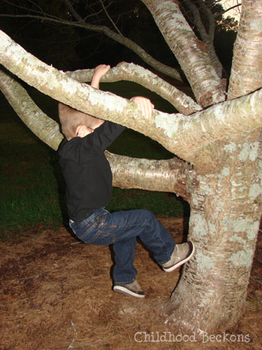 Climbing trees is a great way to connect