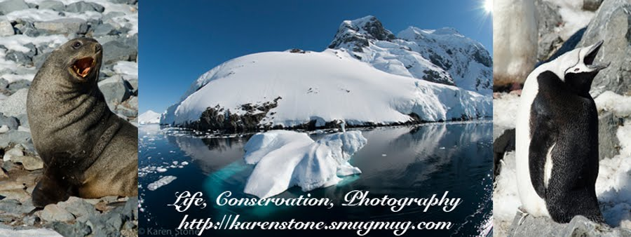 Life, Conservation, Photography