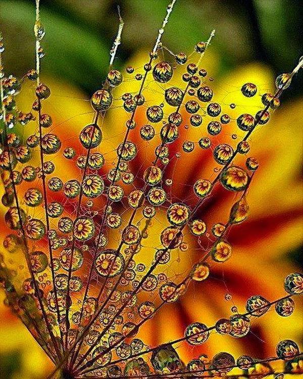 hình nền giọt nước đẹp lung linh