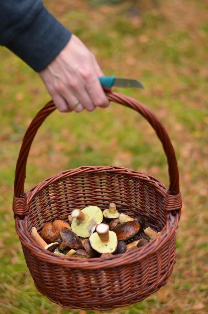 grzyby, grzybobranie, plener jesienny