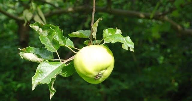 Crumble z jabłkiem