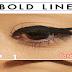 Amazing Bold Eyeliner Tutorial Steps By Steps
