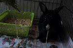 Boss The Bunny