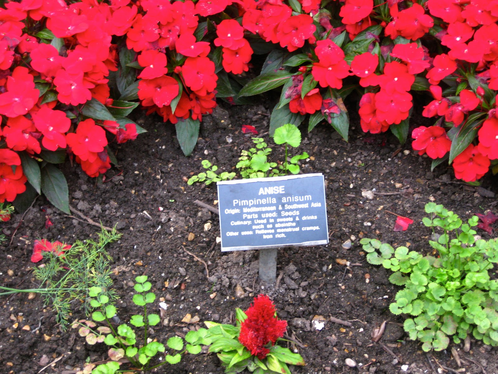 Physic garden wikipedia - Chelsea Physic Garden