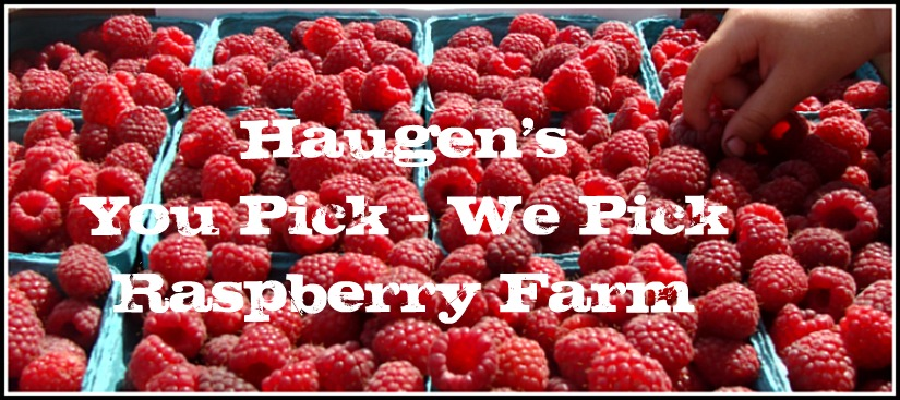 Haugen's Raspberry Farm