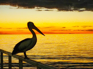 SUNSET WITH PELICAN