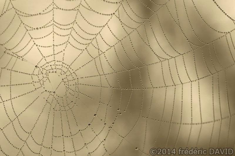 matin rosée gouttes nature toile araignée macro bijou Sorques Seine-et-Marne