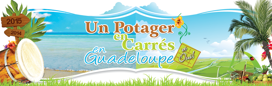 Un Potager en Carrés en Guadeloupe, et oui!