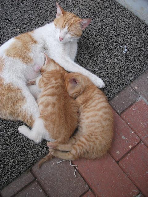 anne ve yavru kediler