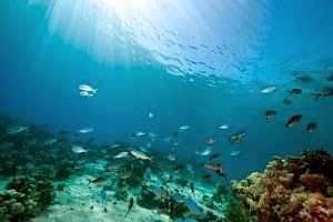 Ekspedisi Laut Dalam Mengungkap Bagaimana Benua Terbentuk (2)